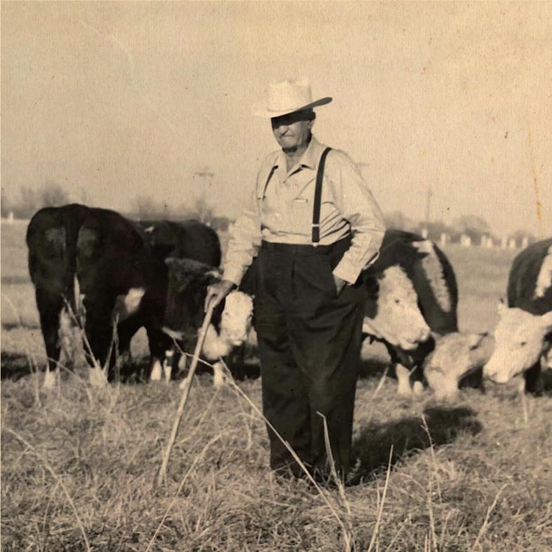 Farmer in front of cattle